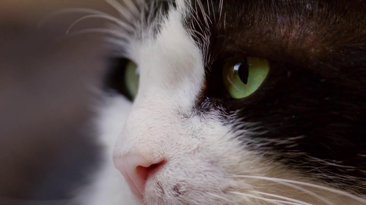 Kedi anatomisi hakkında 5 ilginç bilgi