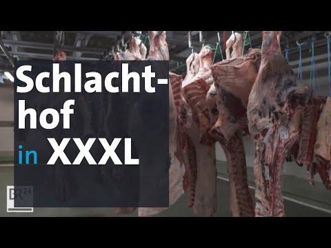 Der größte Rinderschlachthof