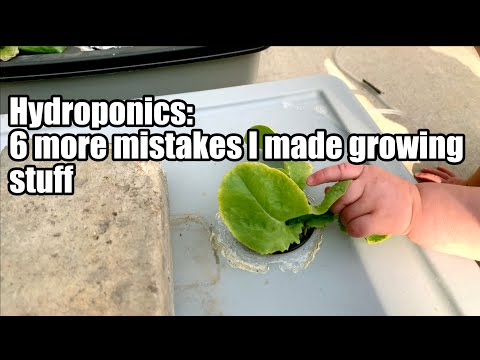 Hydroponics: 6 more mistakes I made growing stuff