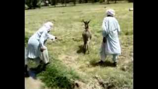 two man with donkey