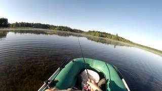 Ловля щуки на мелководье на рассвете (видео-отчет) август 2015 Рыбалка в Ленинградской области щука