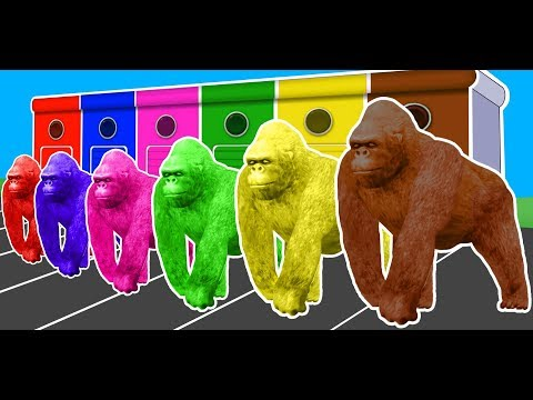 Colors Animals Gorilla Lion & Dinosaurs Fun Learning Video for Kids