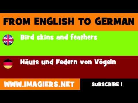 Vögeln Deutsch