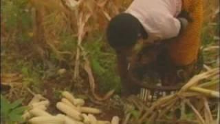 アフリカに緑の革命を! 食糧増産プロジェクト(前編)