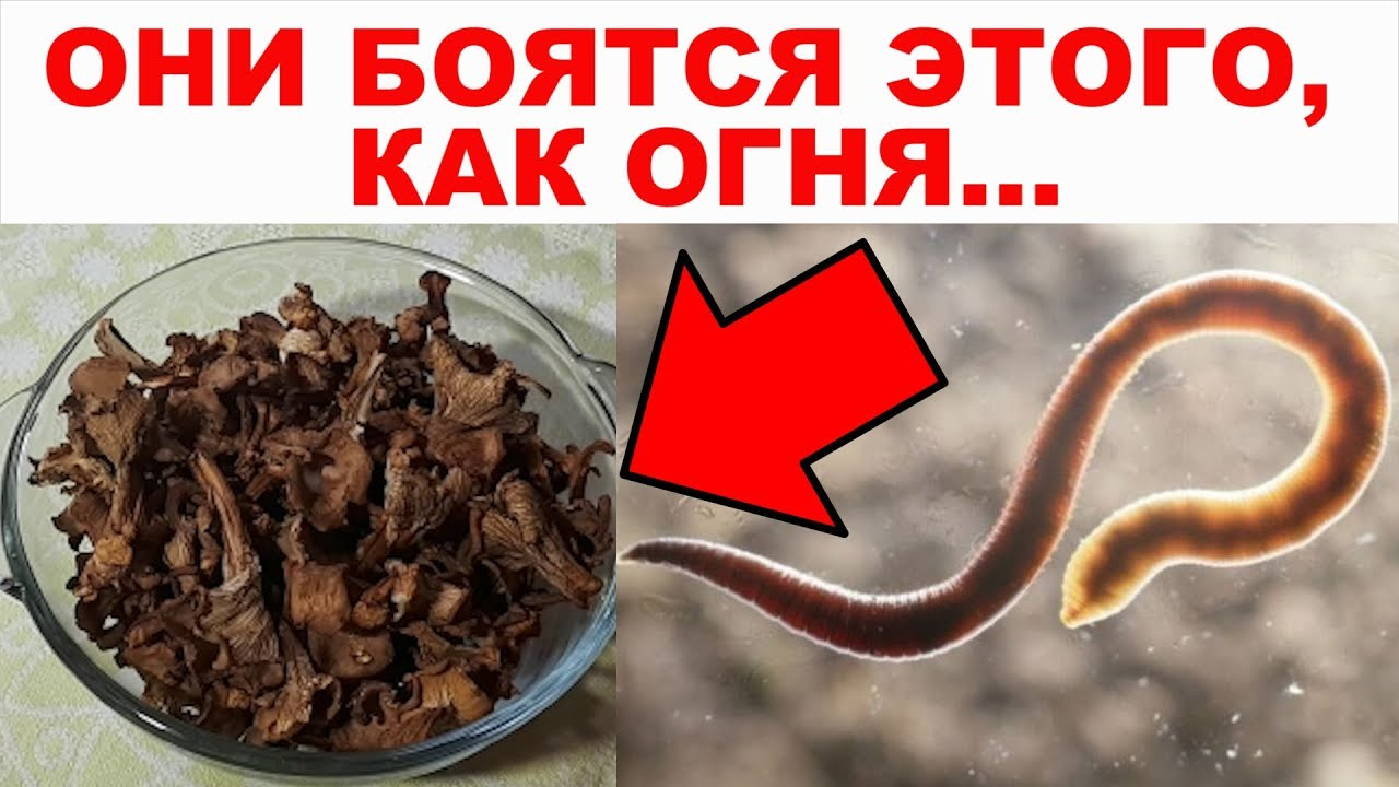 все про глистов и паразитов