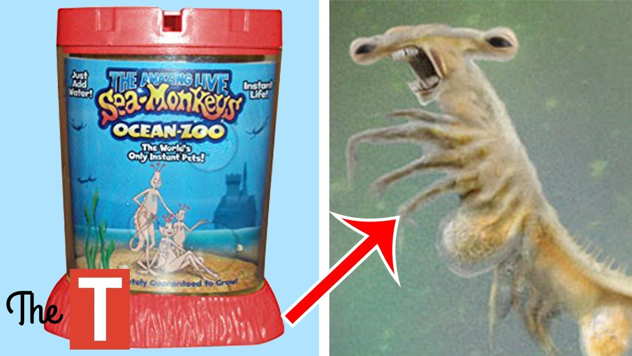 10 Most Messed Up Toys For Kids Youtube