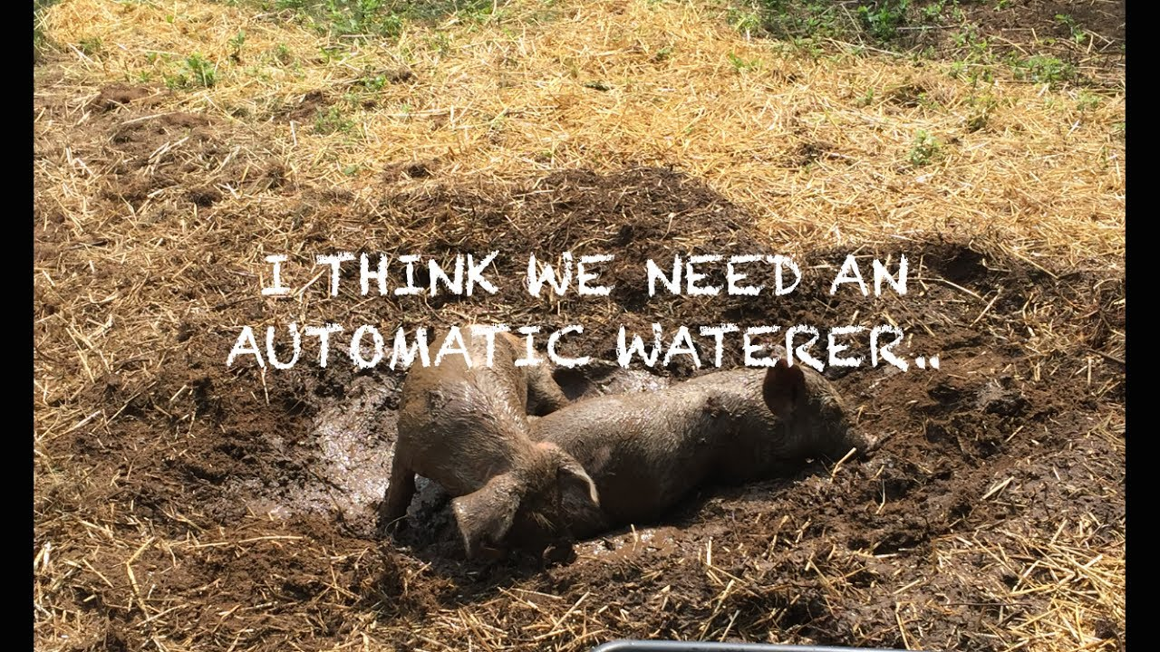 BUILDING AN AUTOMATIC PIG WATERER - YouTube