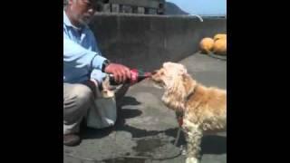 コカ・コーラが大好きな犬。ちゃんとコークの自販機の前に行っておねだ...