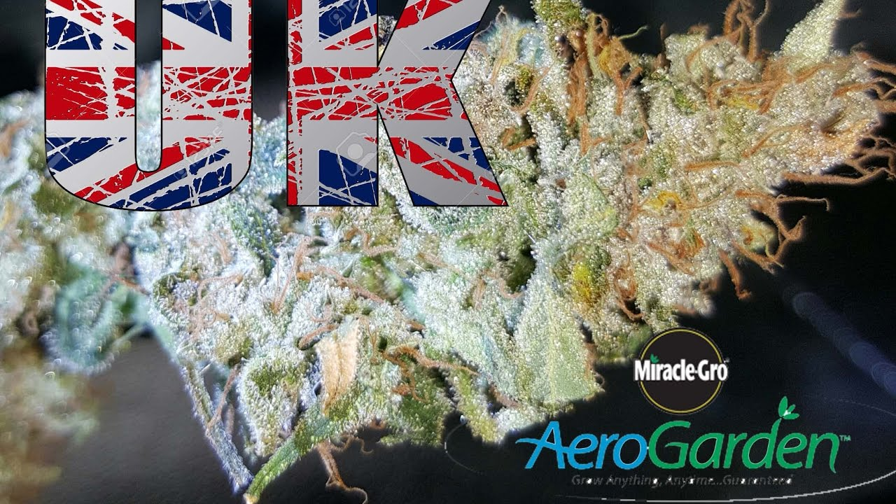 Cannabis grow using aerogarden  miracle gro cannabis grow using aerogarden  miracle gro    YouTube. Aerogarden Cannabis Harvest. Home Design Ideas
