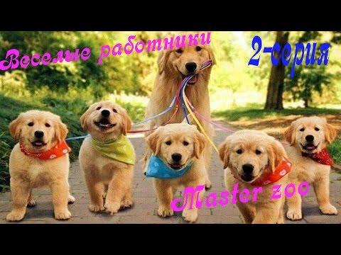 Главная страница - happydog-