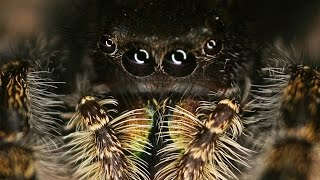 Vision in Jumping Spiders