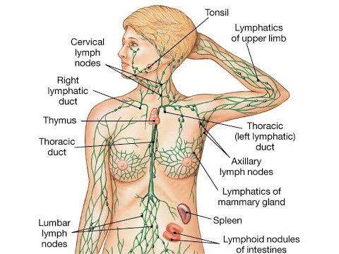What Causes Swollen Lymph Nodes Youtube