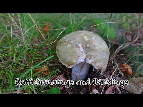 Pilze Sammeln Im Juli 2017 - Rotfußröhrlinge Und Täublinge