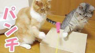 キレの良い高速猫パンチを互いに繰り出す様子がおもしろい猫ズの動画で...