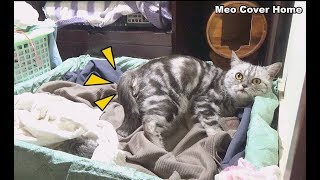 [LIVE] Mother Cat Giving Birth To Four Kittens So Cute | Meo Cover Home