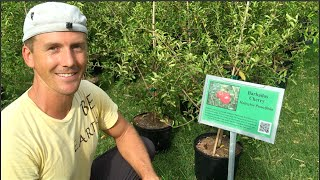 The BEST Cherry Tree to Plant in Arizona & the Southwest USA