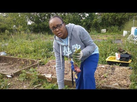 Community Rallies To Defend Community Garden