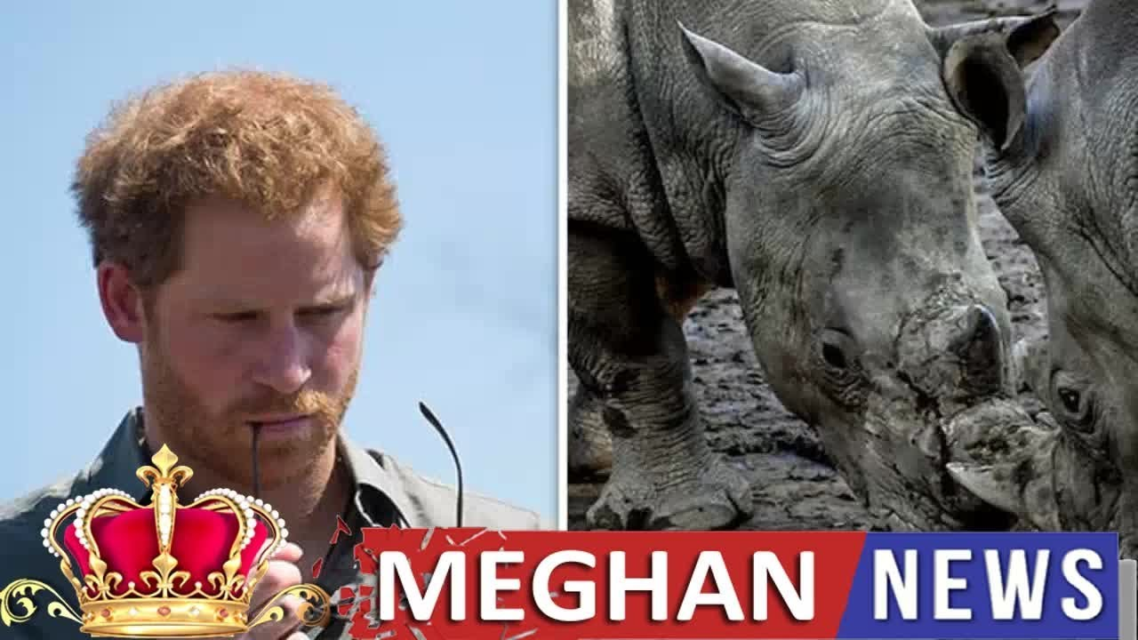 Meghan Fashion -  Prince Harry BOMBSHELL: Duke of Sussex's 'near-death experience' RE
