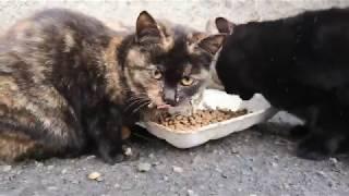 Котята уже подросли, но мама кошка на страже, прогнала сегодня чужака рыжего милаху кота