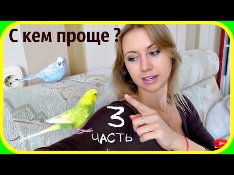 Парное содержание попугаев. Кого проще приручить, самца или самку ч.3