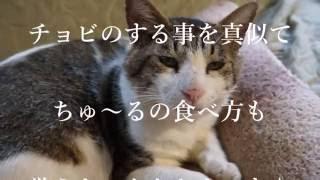 """絢香 Ayaka - """"真夏の果実"""
