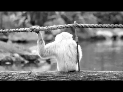 Solitary Monkey