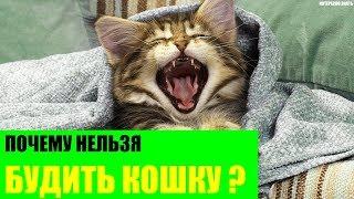 Почему нельзя будить кошку?