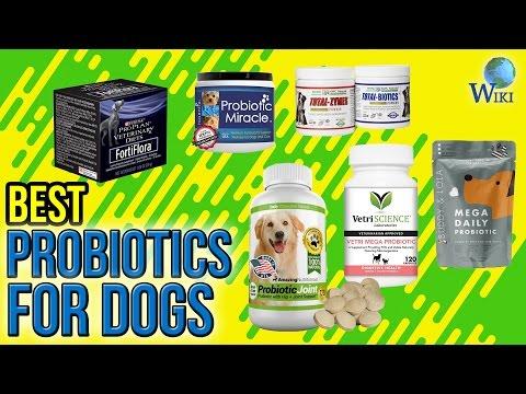 7 Best Probiotics For Dogs 2017