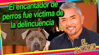 Ni sus perros lo ayudaron roban la casa de Cesar Millan