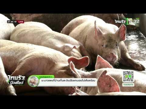 ราคาหมูเนื้อแดงพุ่งผลภัยแล้ง    26-04-59   ไทยรัฐนิวส์โชว์   ThairathTV