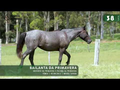 LOTE 38 - Bailanta da Primavera