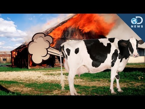 Cow Farts Blow Up A Barn!