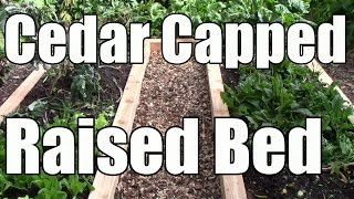 Extending the Life of a Raised Bed by Capping it with Cedar