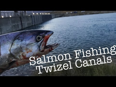 Twizel Canal Salmon Fishing | 1st Day