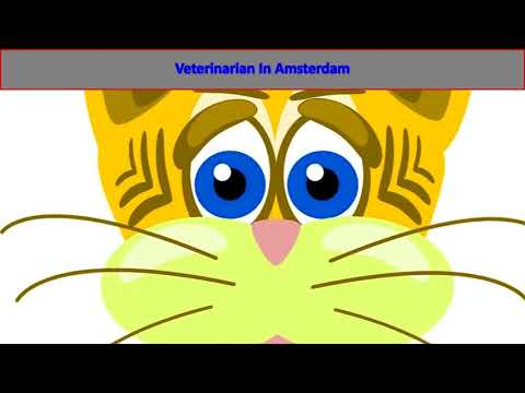 Veterinarian In Amsterdam | Veterinary Clinic in Amsterdam Holland