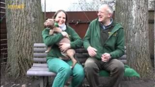 Hundevermittlung - Februar/märz 2011 (tierheim Hannover Tv)