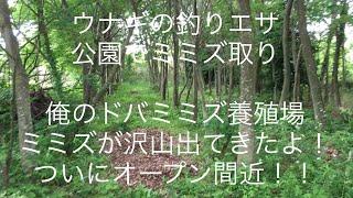 ミミズを取りに例のカブトムシパラダイスの公園へミミズを取りに行って...