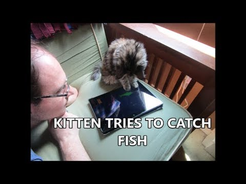 KITTEN TRIES TO CATCH THE FISH🐠