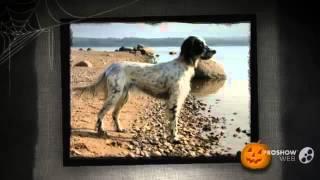 Английская легавая собака порода собак