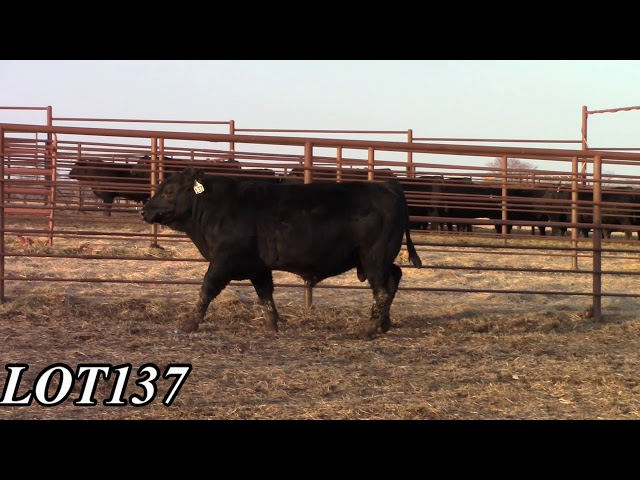 Mead Angus Farms Lot 137