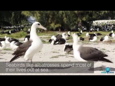 Your Earth Is Blue: Birds