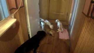 Лисы,собаки,коты,всё в одной квартире