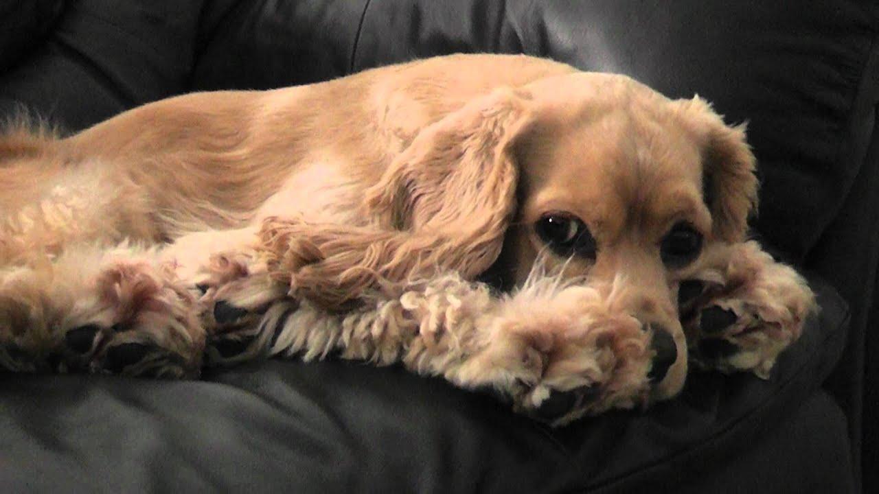 Fighting Sleep with Sad Puppy Dog Eyes Peaking Between his ...  Sad