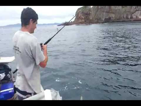 Kahawai & Kingi Fishing in New Zealand