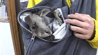 人工哺育で育てていましたが、本個体は残念ながら2012年2月中旬に死亡い...