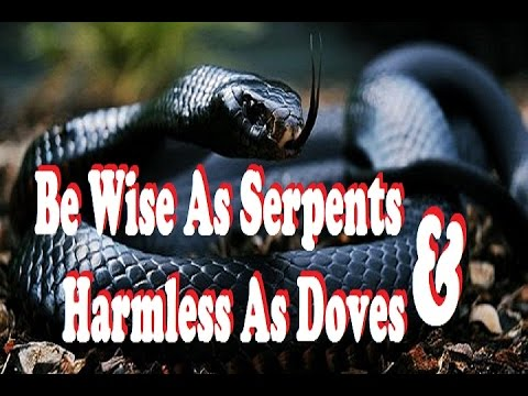 LIVE P.C.~Wise As Serpents & Harmless As Doves~1/24/17