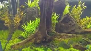 Aquarismo Natural – Minha Iluminação - Parte I #017