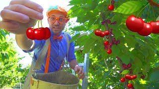 Cherry Farm Tour with Blippi | Healthy Eating for Children