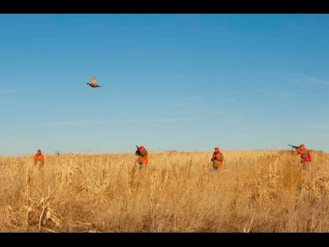 Pheasant Hunting And Walleye Fishing In SD With Thunderstik Lodge 2013
