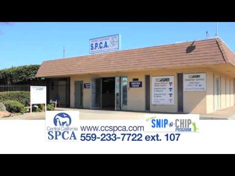 SNIP N CHIP - Central California SPCA Spay/Neuter Program